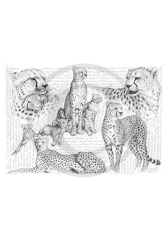 Marcello-art : Faune Africaine 338 - Malaïka, Masai Mara