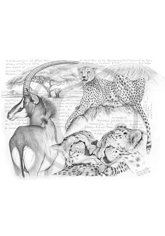 Marcello-art : Faune Africaine 363 - Guépards et antilope sable