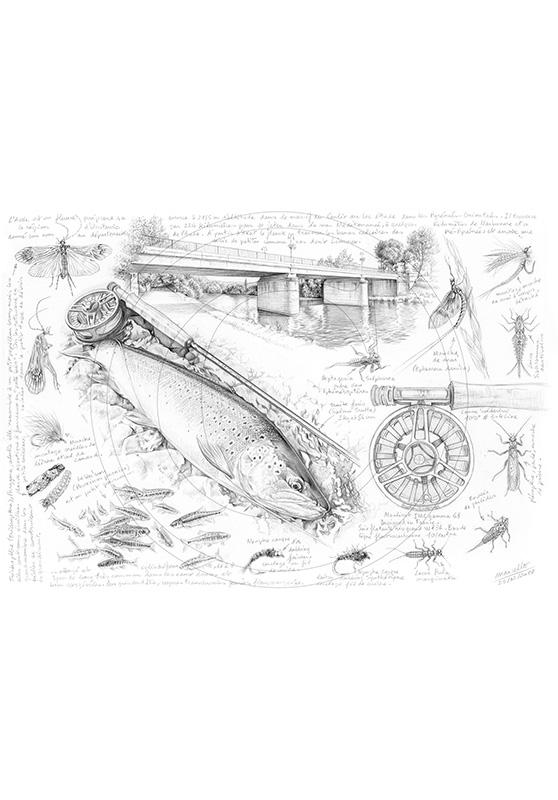 Marcello-art : Faune aquatique 362 - Truite fario de Limoux