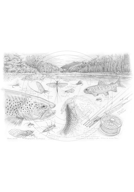 Marcello-art: Aquatic fauna 374 - Fly fishing New Zealand