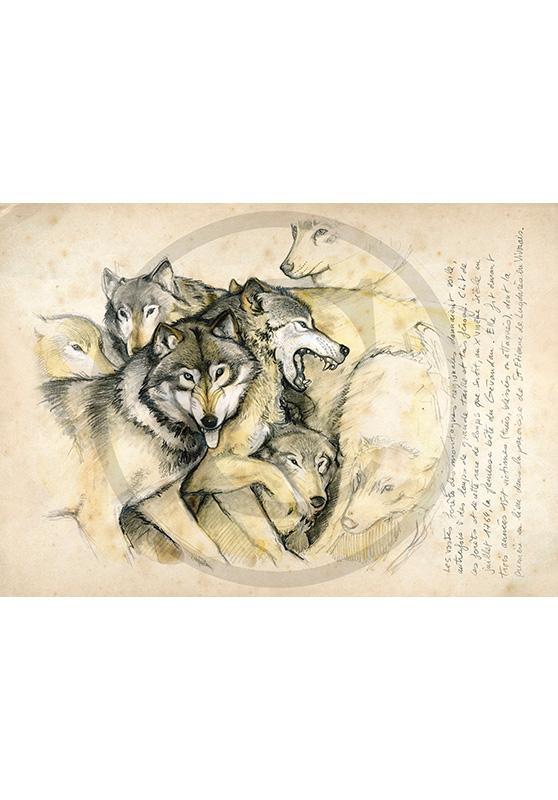 Marcello-art: Fauna temperate zone 25 - Wolf