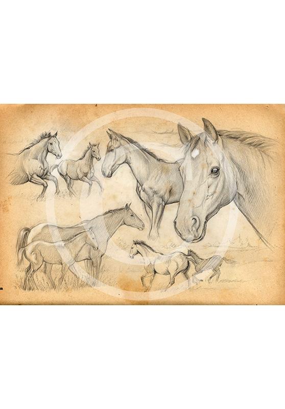 Marcello-art: Fauna temperate zone 59 - Foal