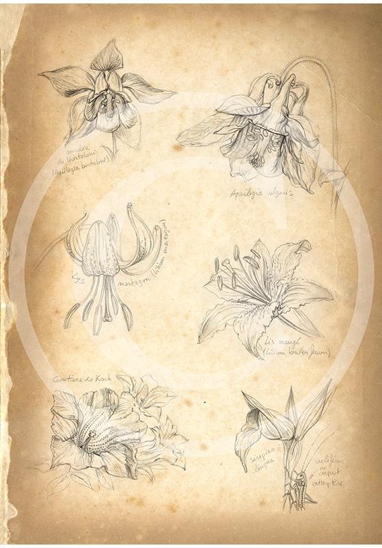 Marcello-art: Fauna temperate zone 118 - Botanical 01