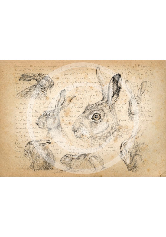 Marcello-art: Fauna temperate zone 172 - Hare 01
