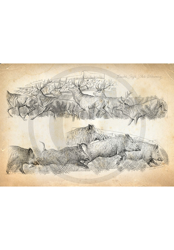 Marcello-art: Fauna temperate zone 359 - Herd of deer and boars Engraving gun