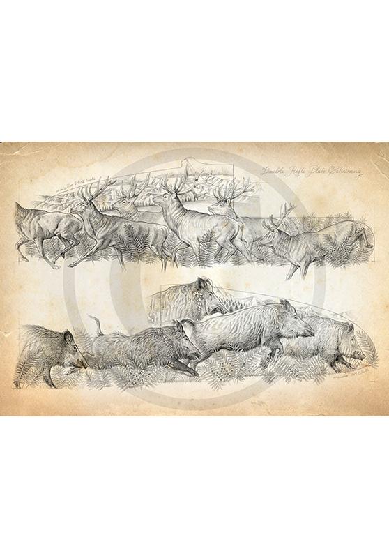 Marcello-art : Faune zone tempérée 359 - Harde de cerfs et sangliers modèle gravure