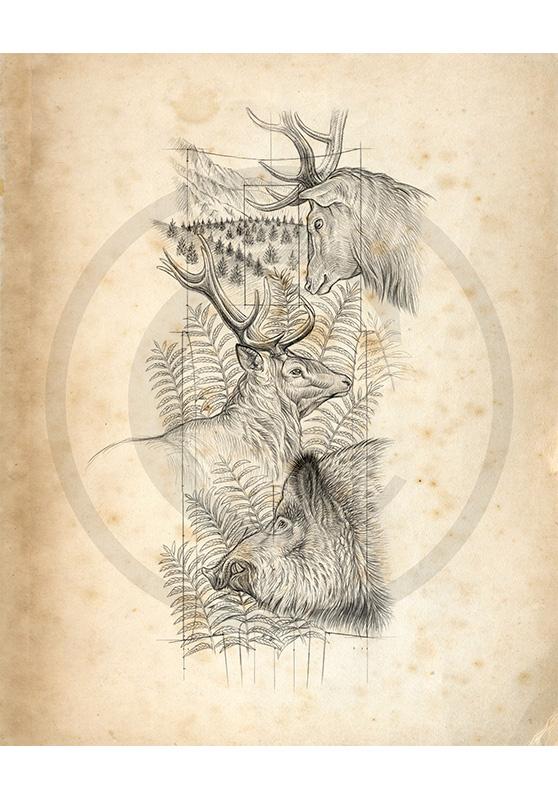 Marcello-art : Faune zone tempérée 360 - Harde de cerfs et sangliers modèle gravure