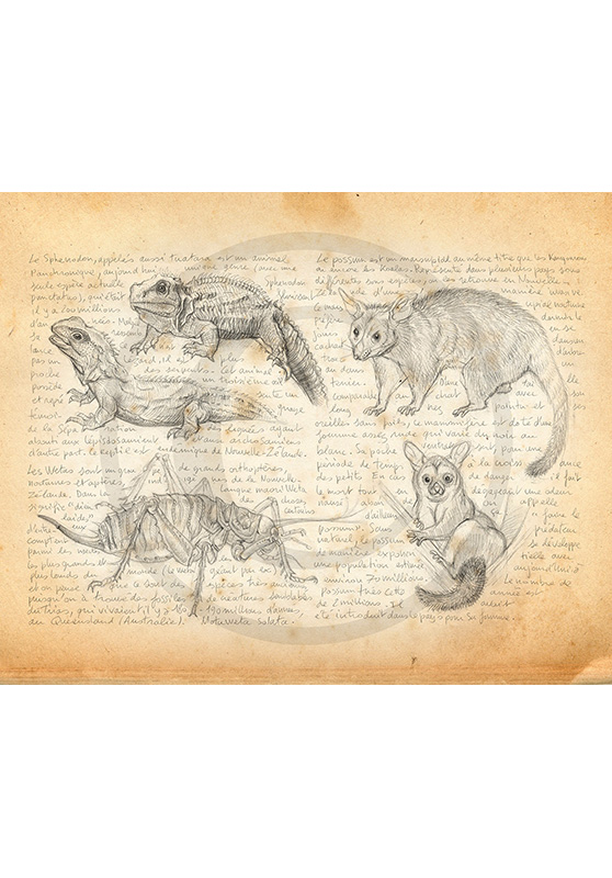 Marcello-art: Fauna temperate zone 377 - Weta, tuatara and possum