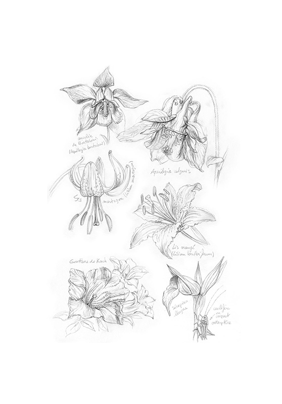 Marcello-art: Wild temperate zones 118 - Botanical 01