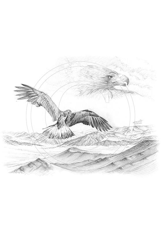 Marcello-art : Faune zones tempérées 201 - Sayat - Aigle