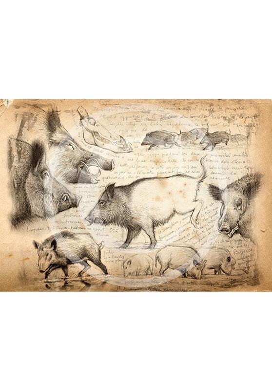 Marcello-art: Originals on canvas 108 - Boar-02