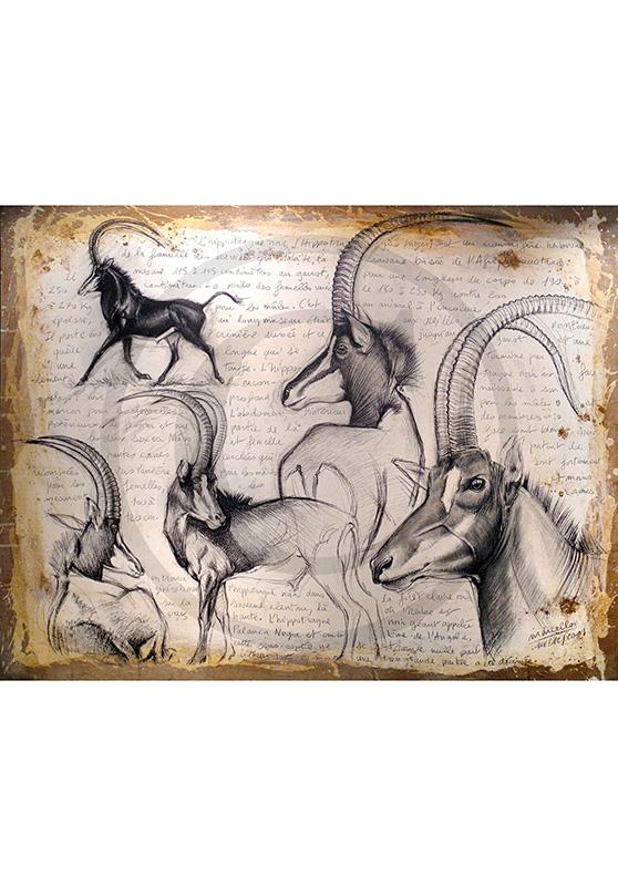 Marcello-art: Originals on canvas 109 - Hippotragus niger - Sable-03