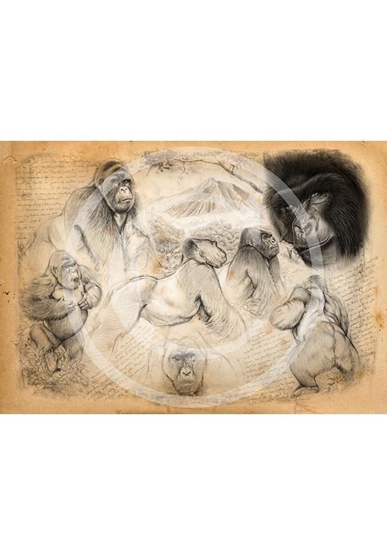 Marcello-art: Originals on canvas 193 - Mountain gorilla
