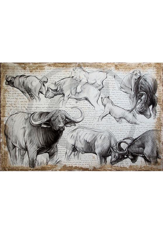 Marcello-art: Originals on canvas 225 - Cap buffaloes