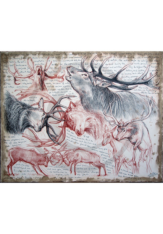Marcello-art: Originals on canvas 226 - Red Deer