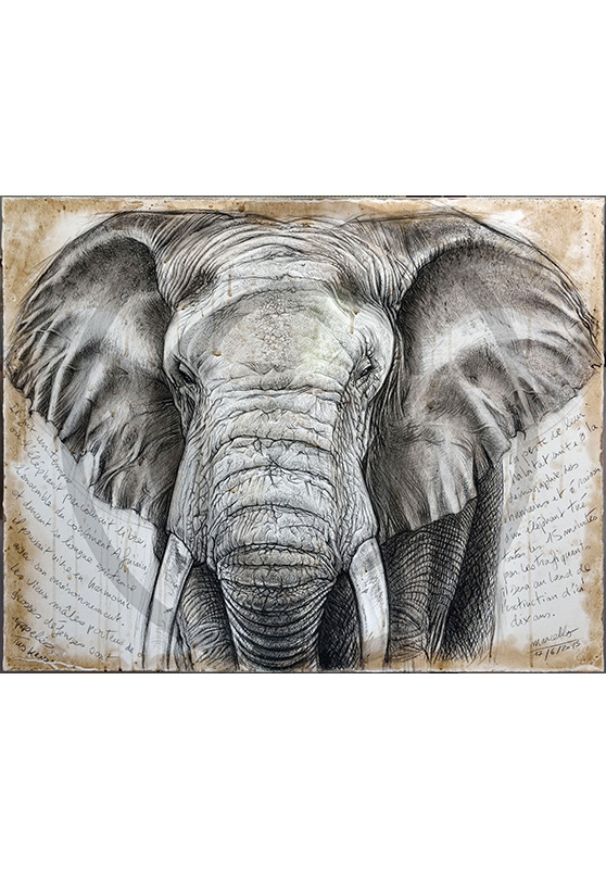 Marcello-art: Originals on canvas 299 - Tusker