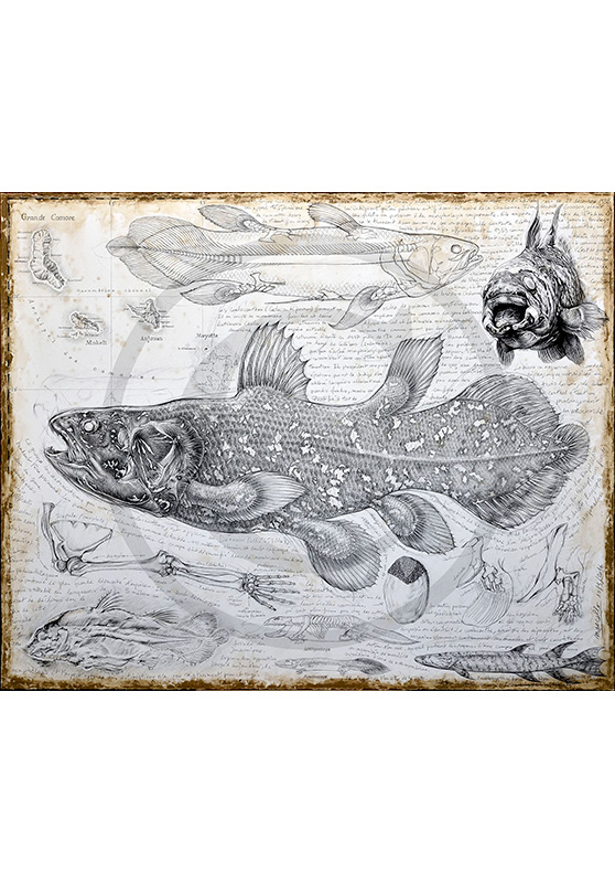 Marcello-art : Originaux sur toile 346 - Latimeria chalumnae