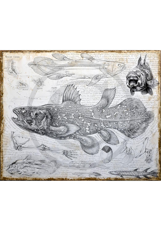 Marcello-art: Originals on canvas 346 - Latimeria chalumnae