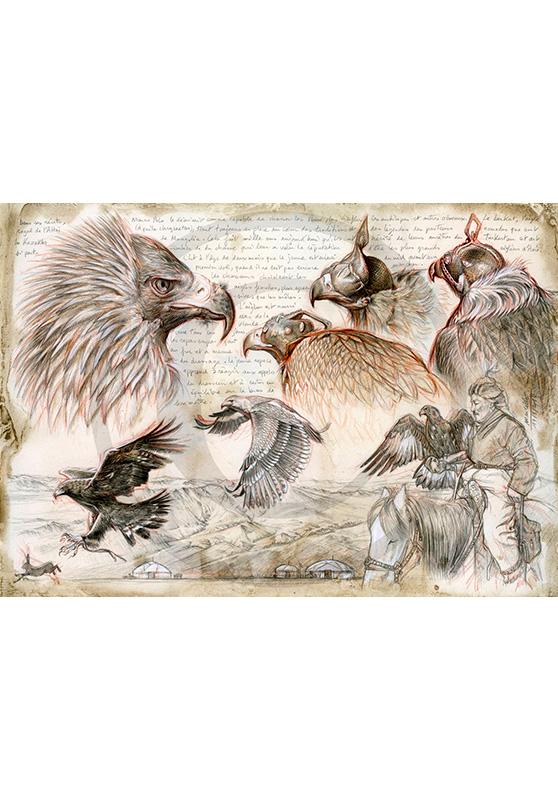Marcello-art : Ornithologie 256 - Aigliers Kazakhs de l'Altai