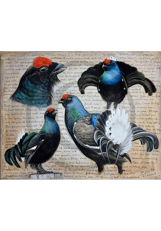 Marcello-art : Ornithologie 309 - Tétras lyre