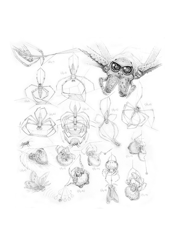 Marcello-art: Entomology 92 - Gladiator and bolas spider
