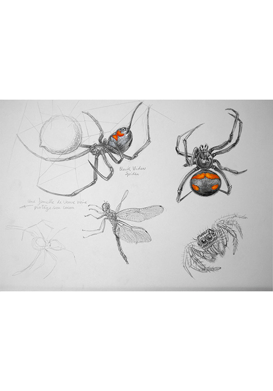 Marcello-art: Entomology 124 - Black Widow