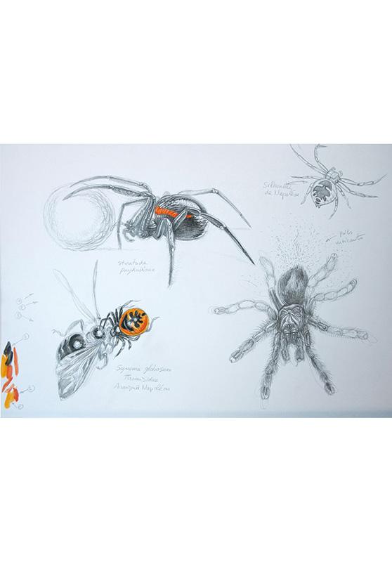 Marcello-art: Entomology 126 - Napoléon spider