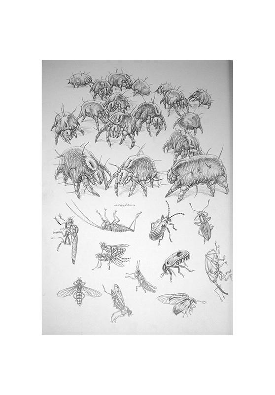 Marcello-art: Entomology 154 - Arachna board 24