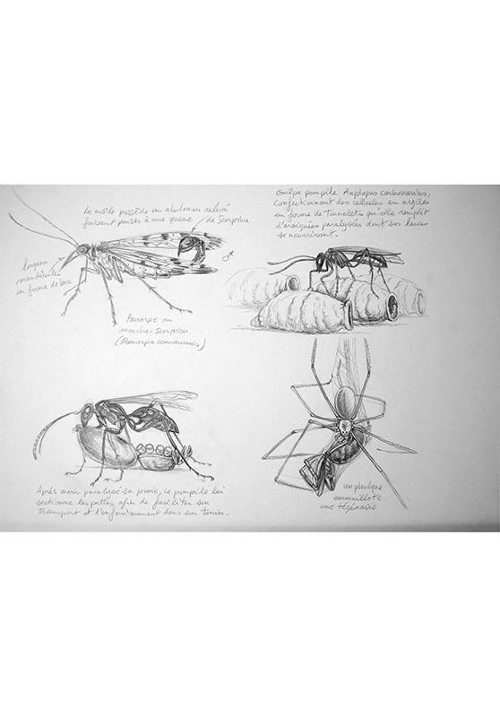 Marcello-art: Entomology Arachna board 12