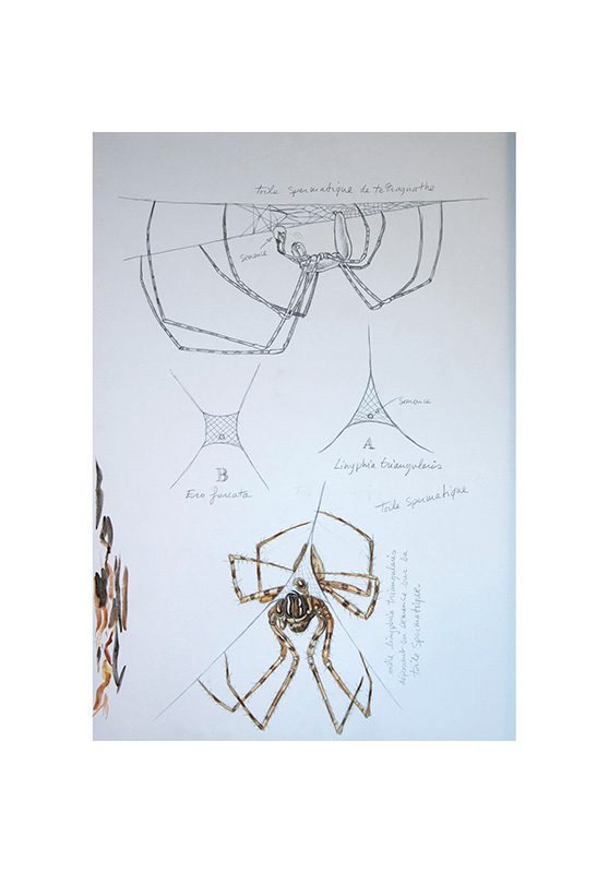 Marcello-art : Entomologie 155 - Arachna planche 25