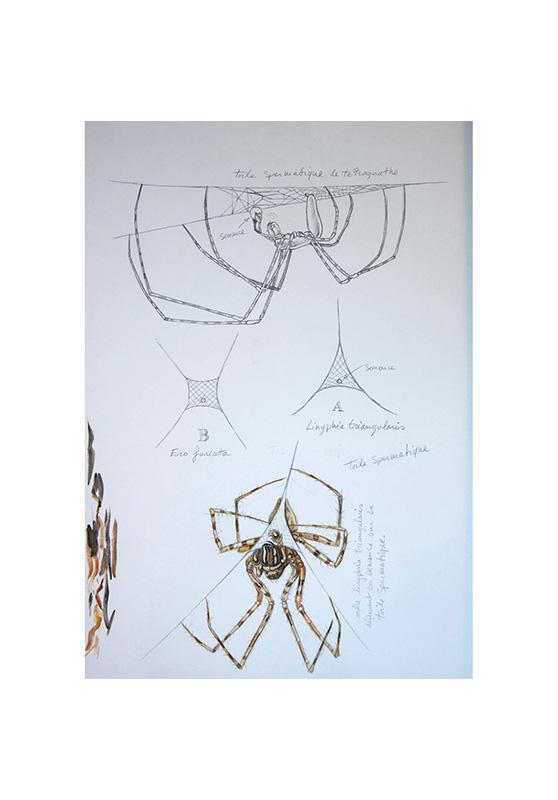 Marcello-art: Entomology 155 - Arachna board 25