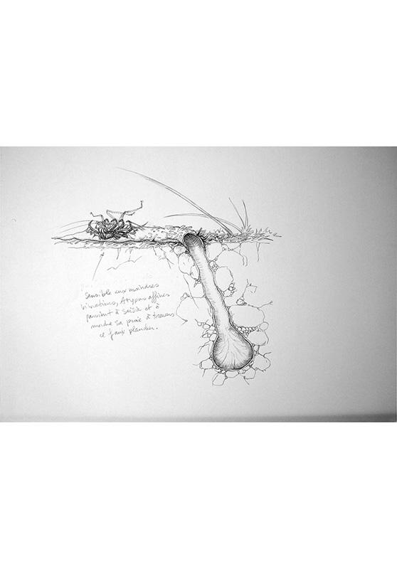 Marcello-art: Entomology 156 - Arachna board 26