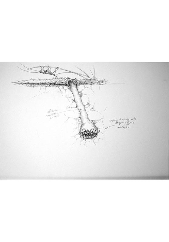 Marcello-art: Entomology 157 - Arachna board 27