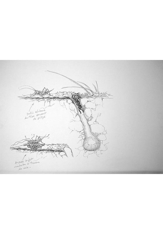 Marcello-art: Entomology 158 - Arachna board 28