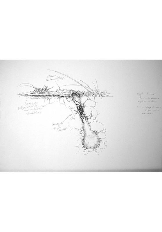 Marcello-art: Entomology 159 - Arachna board 29