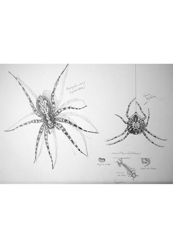 Marcello-art: Entomology 160 - Arachna board 30