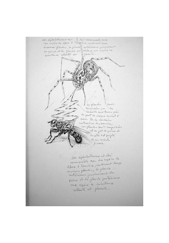 Marcello-art: Entomology 161 - Arachna board 31