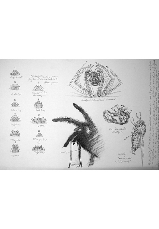 Marcello-art: Entomology 162 - Arachna board 32