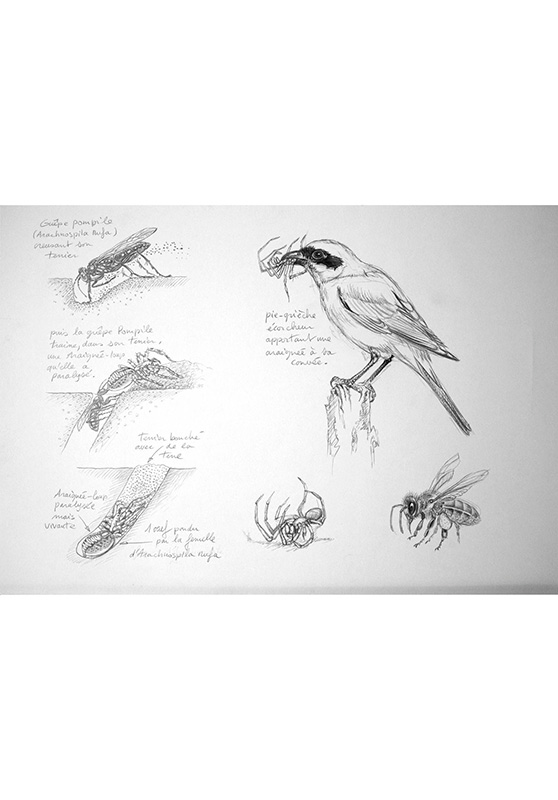 Marcello-art : Entomologie 163 - Arachna planche 33