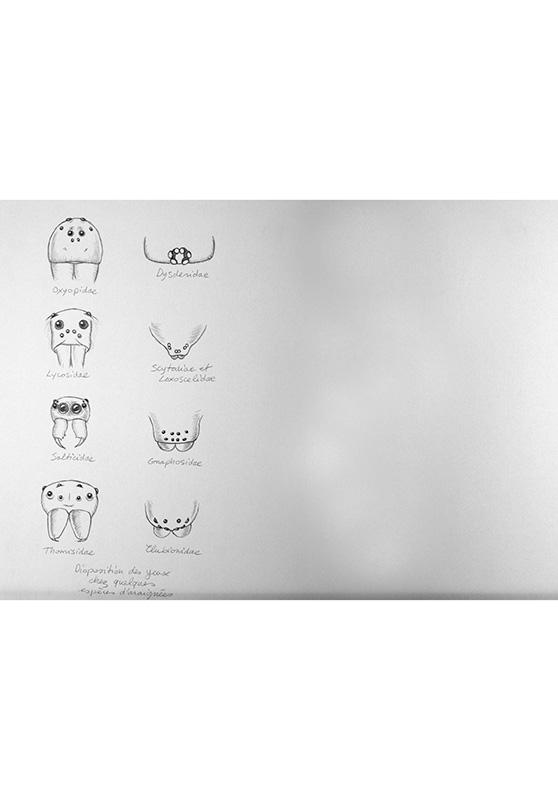 Marcello-art: Entomology 165 - Arachna board 35