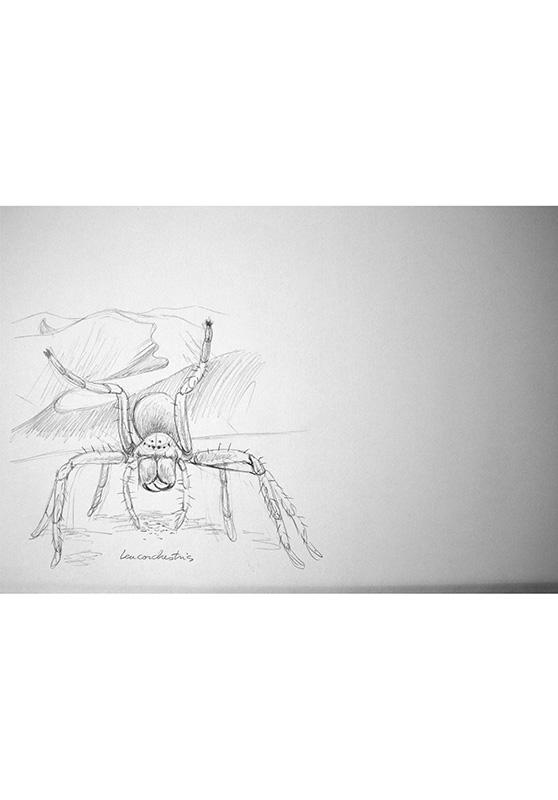 Marcello-art: Entomology 166 - Arachna board 36