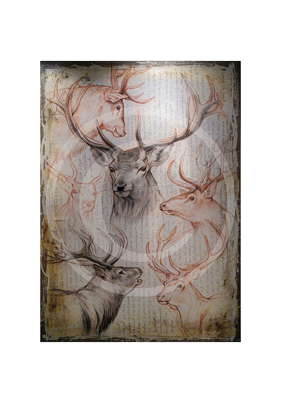 Marcello-art: Originals on canvas 107 - Red deer-03