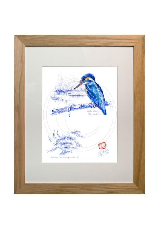 Marcello-art: Ornithology 398 - European Kingfisher