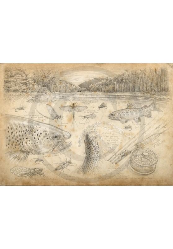 Marcello-art : Faune aquatique 374 - Pêche à la mouche Nouvelle-Zélande