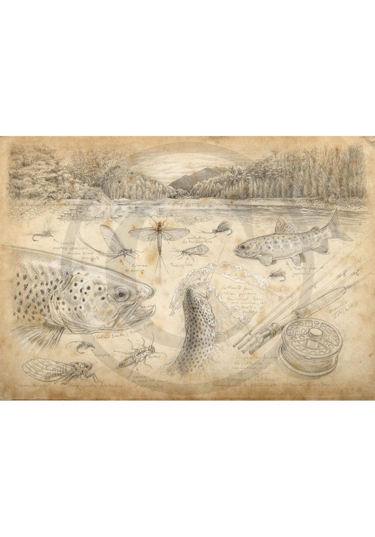 Marcello-art: Aquatic fauna 374 - Fly fishing New Zealand