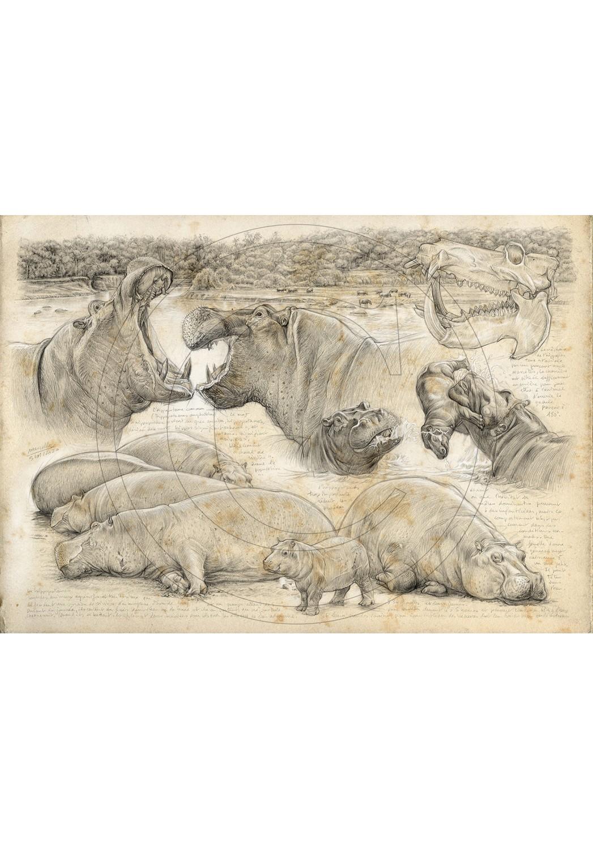 Marcello-art: On paper 402 - Olmakau, Hippopotamus