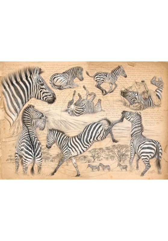 Marcello-art : Sur papier 403 - Equus quagga