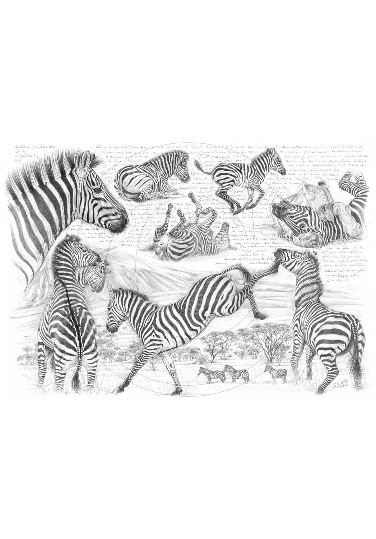 Marcello-art : Faune Africaine 403 - Equus quagga