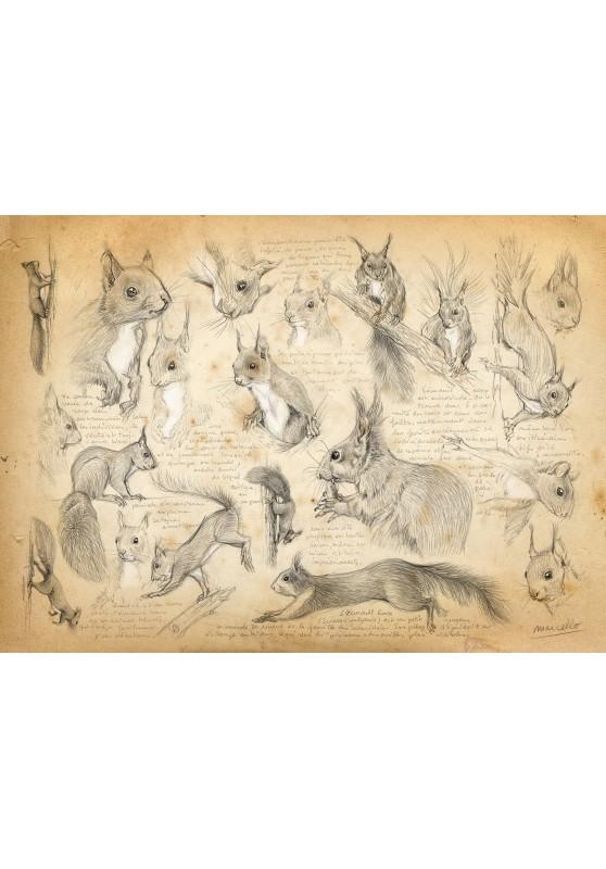 Marcello-art : Cartes de faire part 29 - Écureuil roux
