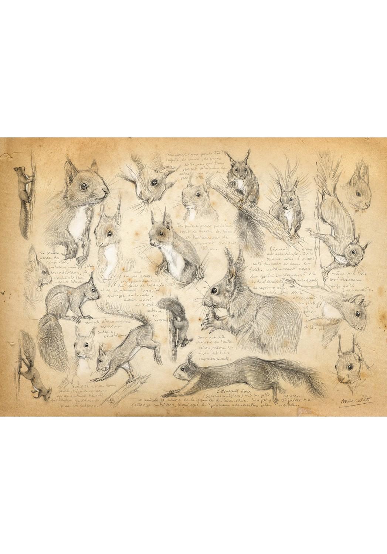 Marcello-art: Wish Card 29 - Red squirrel